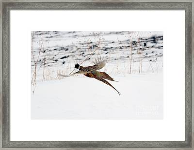 The Great Escape Framed Print by Lori Tordsen