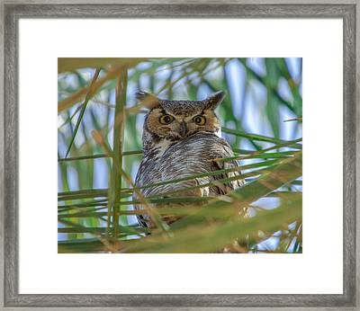 The Great Horned Owl Framed Print by Robert  Aycock