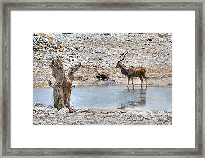 Framed Print featuring the photograph The Great Kudu  by Juergen Klust