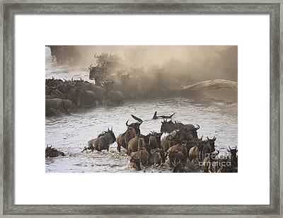 Framed Print featuring the photograph The Great Migration  by Chris Scroggins