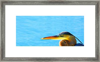 The Great One - Blue Heron By Sharon Cummings Framed Print by Sharon Cummings