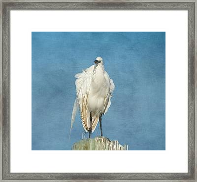The Great One Framed Print by Kim Hojnacki