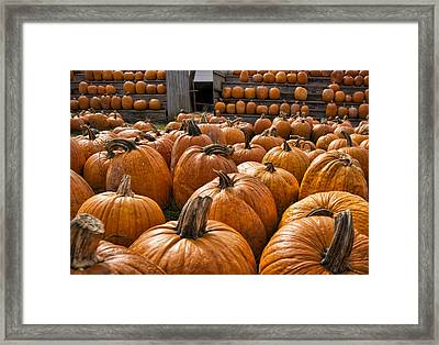 The Great Pumpkin Farm Framed Print by Peter Chilelli