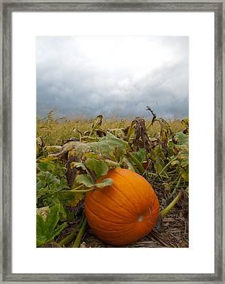 The Great Pumpkin Framed Print