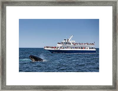 The Great Race Framed Print
