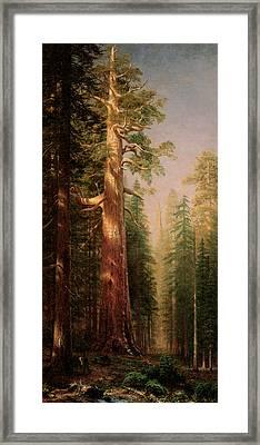 The Great Trees Mariposa Grove California Framed Print by Albert Bierstadt