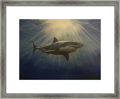 The Great White King Of The Seas Framed Print by Alexandros Tsourakis