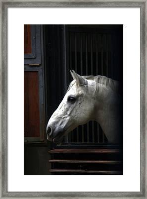 The Great White Stallion Framed Print