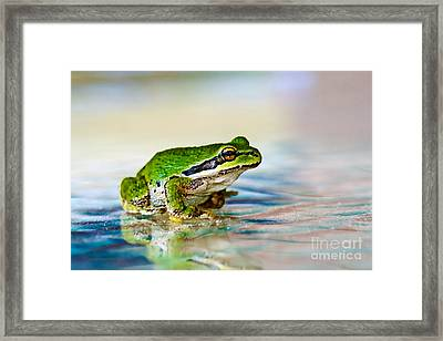 The Green Frog Framed Print