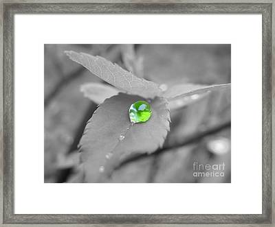 The Green Pearl Framed Print by Patti Whitten