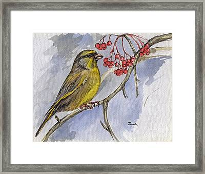 The Greenfinch Framed Print by Angel  Tarantella