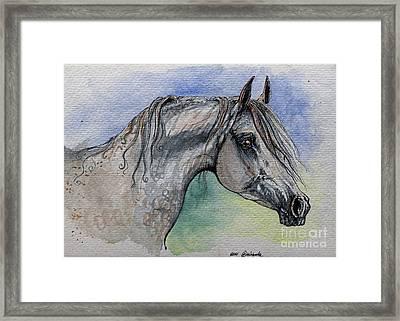 The Grey Arabian Horse 14 Framed Print by Angel  Tarantella