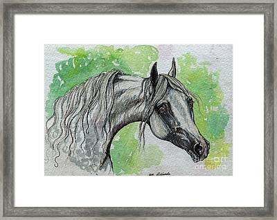 The Grey Arabian Horse 15 Framed Print by Angel  Tarantella