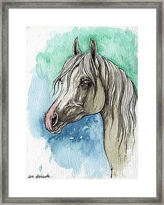 The Grey Arabian Horse 16 Framed Print