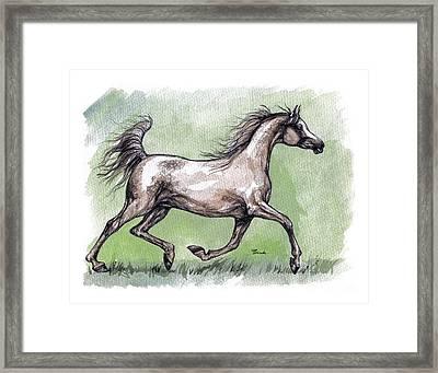 The Grey Arabian Horse 8 Framed Print by Angel  Tarantella