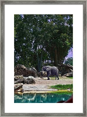 The Grey Beast Framed Print by Ryan Crane