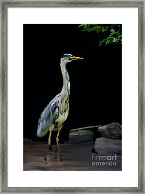 The Grey Heron Framed Print