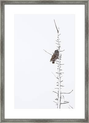 The Grey Hunter On White Framed Print
