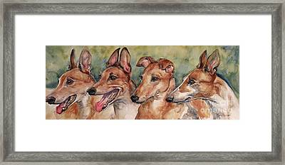 The Greyhounds Framed Print by Maria's Watercolor