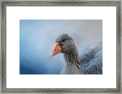The Greylag Goose Framed Print by Jai Johnson