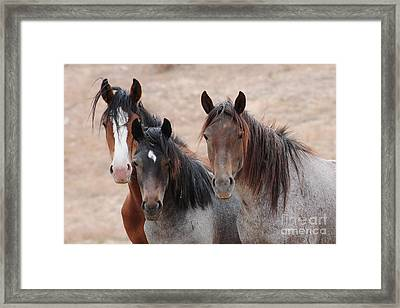 The Greys Framed Print by Vinnie Oakes