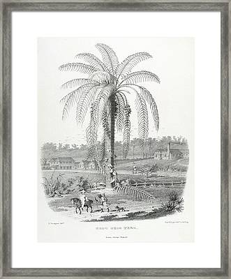 The Groo Groo Tree Framed Print by British Library