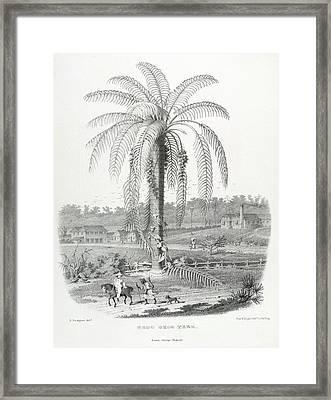 The Groo Groo Tree Framed Print