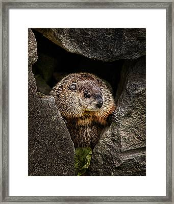 The Groundhog Framed Print by Bob Orsillo