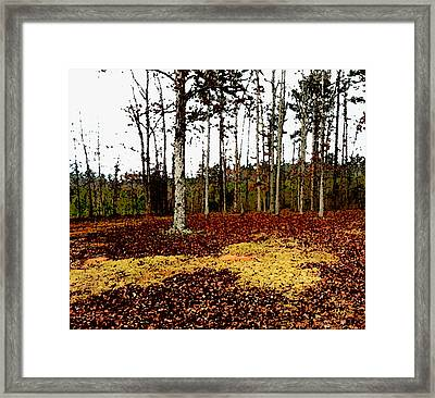 The Grove Framed Print by Terry Atkins