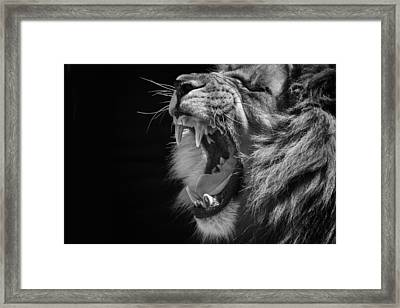 The Growl Framed Print