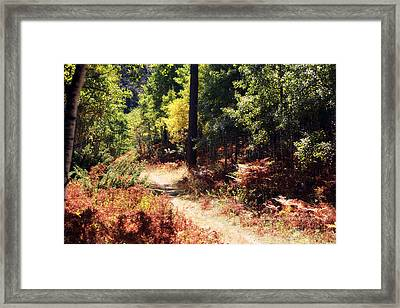 The Growth Framed Print