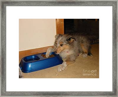 The Guard Dog Framed Print by David Grant