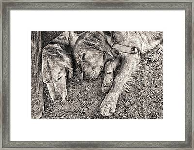 The Guardian Framed Print by Ron Regalado