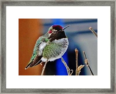 The Guardian Framed Print by VLee Watson