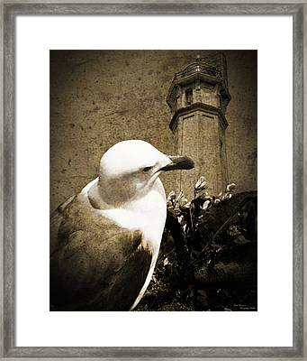 The Gull Framed Print