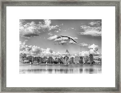The Gull Framed Print by Howard Salmon