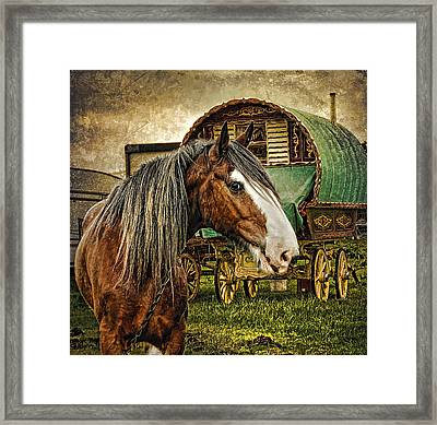 The Gypsy Vanner Framed Print