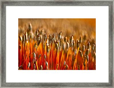 The Haircap Moss Framed Print