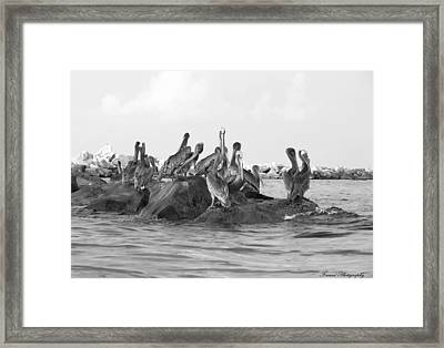 The Hang Out  Framed Print