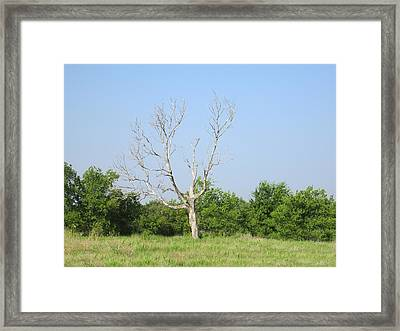 The Hanging Tree Framed Print by Rosalie Klidies