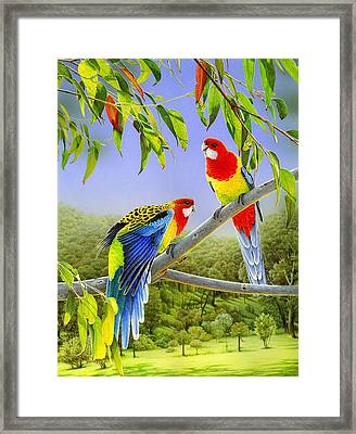 The Happy Couple - Eastern Rosellas  Framed Print