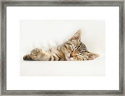 The Happy Kitten Framed Print by Roeselien Raimond