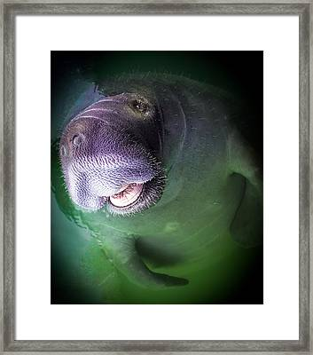 The Happy Manatee Framed Print by Karen Wiles