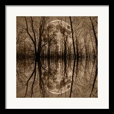 Within A Tree Framed Prints
