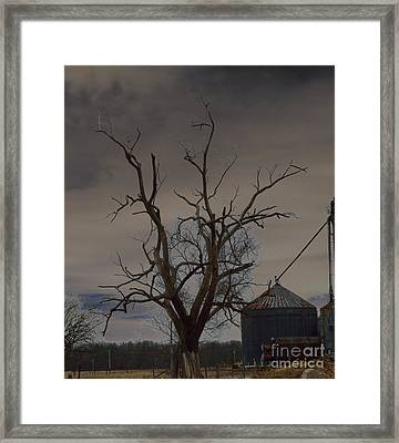 The Haunting Tree Framed Print