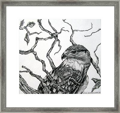 Framed Print featuring the drawing The Hawk by Alison Caltrider