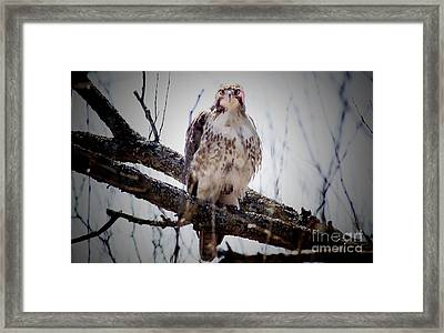 The Hawk Framed Print