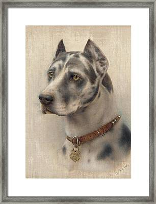 The Head Of A Doberman Framed Print by Wilhelm Schwar