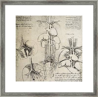 The Heart And The Circulation Framed Print by Leonardo Da Vinci