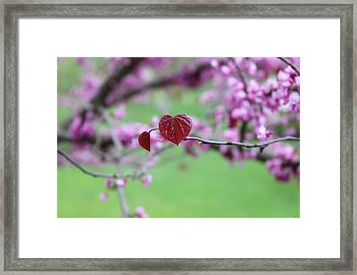 The Heart Grows Framed Print